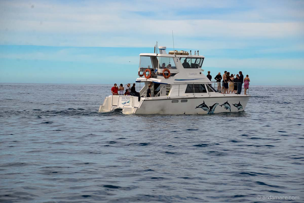 KaikouraDuskyDolphins-NZ_DSC_2047_07558_2013