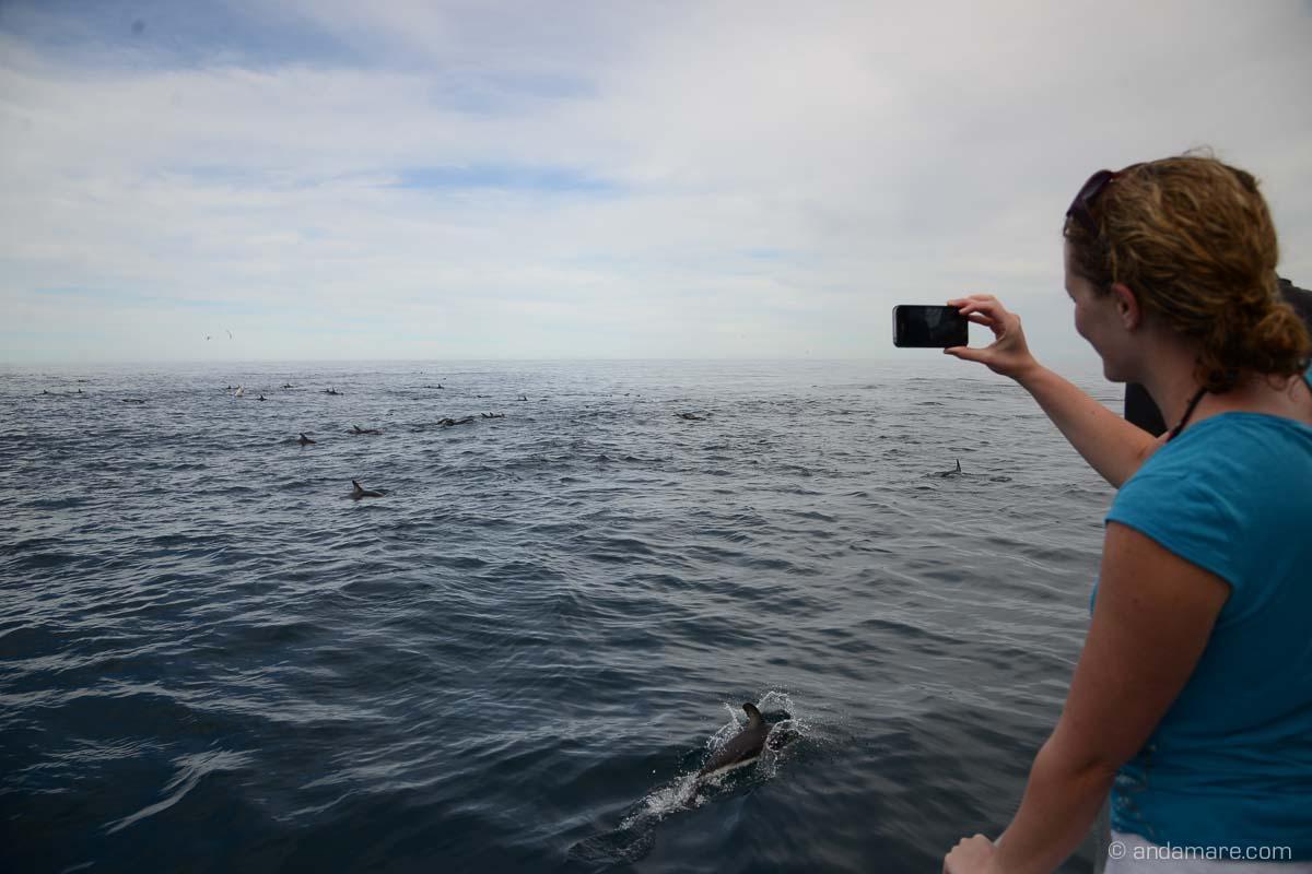 KaikouraDuskyDolphins-NZ_DSC_2072_07579_2013