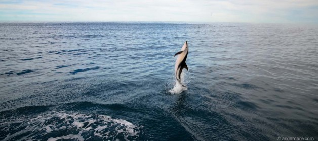 Kaikoura: Enjoy swimming with dusky dolphins!