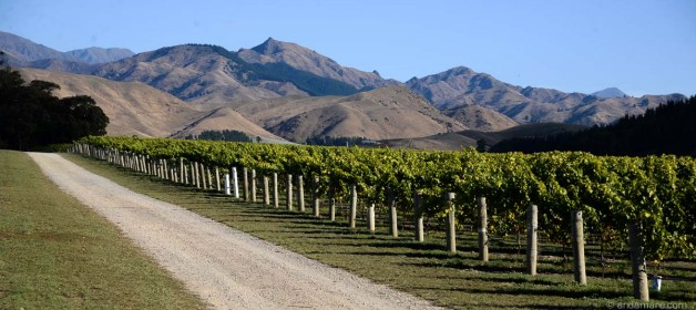 Marlborough Wineries and Cafes…